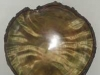204-White-Birch-Burl---gree